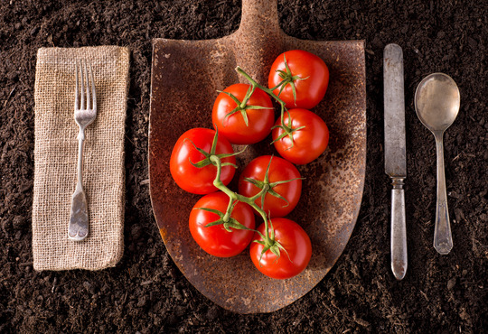 Food for Thought: 3 Ways SAP Business One Provides Effective Traceability for Fresh Produce Companies
