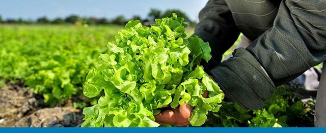 5 Ways SAP Business One Minimizes the Impact of Produce Recalls